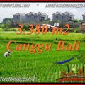 Magnificent LAND SALE IN Canggu Echo beach BALI TJCG199