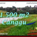 Exotic Canggu Batu Bolong BALI LAND FOR SALE TJCG198
