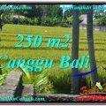 Beautiful LAND FOR SALE IN Canggu Pererenan BALI TJCG207